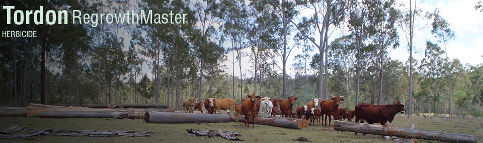 Cattle Timber