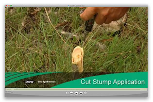 Cut Stump Application