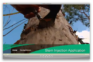 Stem Injection Application