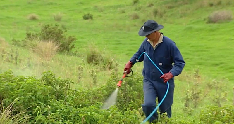 Spraying weeds in the right conditions